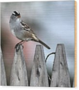 White-crowned Sparrow 2 Wood Print