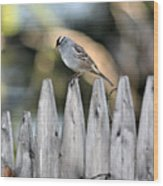 White-crowned Sparrow 3 Wood Print