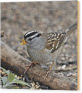 White Crowned Sparrow With Seeds Wood Print