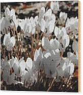 White Cyclamen Wood Print
