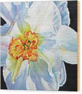 White-daffodil Wood Print
