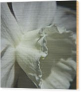 White Daffodil Wood Print