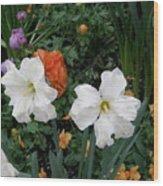 White Daffodills Wood Print