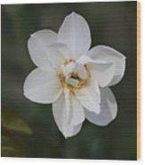 White Daffodils Wood Print