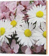 White Daisies Flowers Art Prints Spring Pink Blossoms Baslee Wood Print