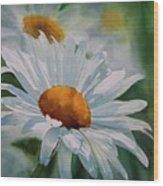 White Daisies Wood Print by Sharon Freeman