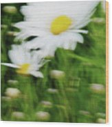 White Daisy Digital Oil Painting Wood Print