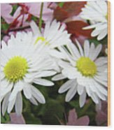 White Daisy Floral Art Print Canvas Pink Blossom Baslee Troutman Wood Print
