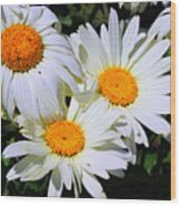 White Daisy Flowers Wood Print