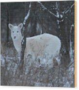 White Deer In Winter Wood Print
