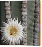 White Desert Jewel Wood Print