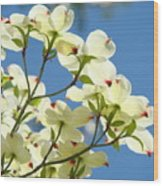 White Dogwood Flowers 1 Blue Sky Landscape Artwork Dogwood Tree Art Prints Canvas Framed Wood Print