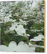 White Dogwood Flowers 6 Dogwood Tree Flowers Art Prints Baslee Troutman Wood Print