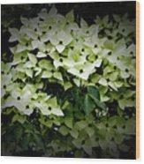 White Dogwood Wood Print