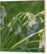 White Drooping Flower Wood Print