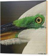 White Egret 1 Wood Print