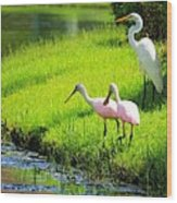 White Egret And Roseate Spoonbills Wood Print