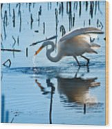 White Egret At Horicon Marsh Wisconsin Wood Print
