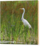 White Egret In Waiting Wood Print