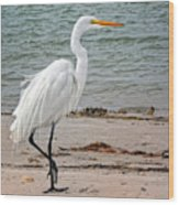 White Egret On Beach Wood Print