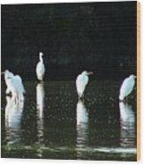 White Egrets Wood Print