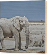 White Elephants Wood Print