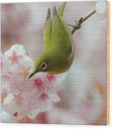 White-eye And Cherry Blossoms Wood Print