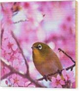 White Eye Bird Wood Print by masahiro Makino