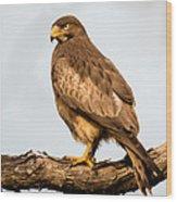 White-eyed Buzzard Butastur Teesa Wood Print
