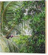 White Faced Capuchin Monkey Costa Rica Wood Print