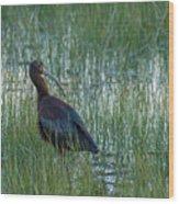 White-faced Ibis In Idaho Wood Print