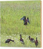 White-faced Ibis Preparing To Land Wood Print