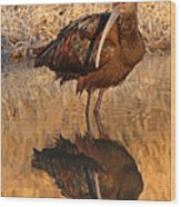 White-faced Ibis Reflecting On Late Spring Morning Wood Print