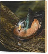 White-faced Whistling Duck  Wood Print