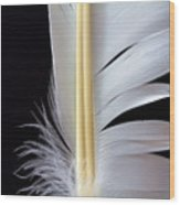 White Feather Wood Print