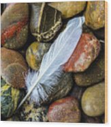 White Feather On River Stones Wood Print