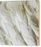 White Feathers With Gold Wood Print