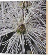 White Flora Wood Print