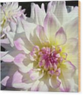 White Floral Art Bright Dahlia Flowers Baslee Troutman Wood Print