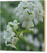 White Floral Cluster Wood Print