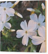 White floral lights Wood Print