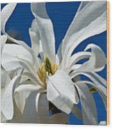 White Flower Blue Skies Wood Print