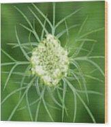 White Flower Spidery Leaves Wood Print