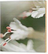 White Bottlebrush Buckeye Wood Print