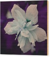 White Flower W/purple Background Wood Print