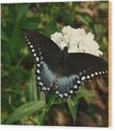 White Flowered Butterfly Wood Print