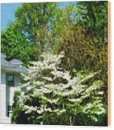 White Flowering Tree Wood Print