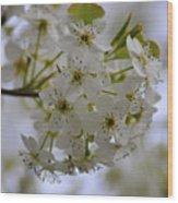 White Flowers On A Tree Wood Print