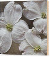 Dogwood White Flowers On Stones Wood Print