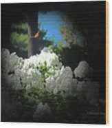White Flowers With Monarch Butterfly Wood Print